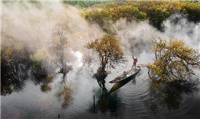 Cảnh rừng ngập mặn Huế chuyển vàng ngày vào thu khiến lòng người thổn thức