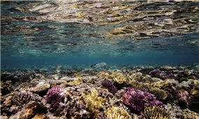 Gần 12.000km2 rạn san hô trên thế giới biến mất do biến đổi khí hậu