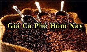 Giá cà phê hôm nay 11/10: Tiếp tục giữ ổn định