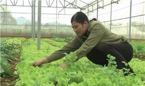Chuyển đổi cơ cấu cây trồng gắn với hình thành kinh tế hợp tác