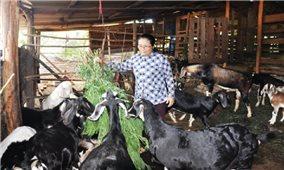 Người nuôi dê ở Bình Phước đang gặp khó