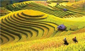 Hồng Thái Đất và người