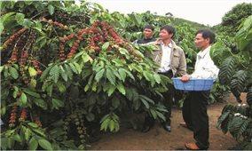 Tự sản xuất phân bón cho cây trồng: Hướng đi mới của nông dân Bình Phước