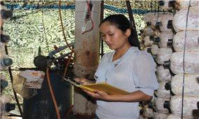 Khởi nghiệp bằng nghề trồng nấm