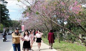 Thêm cung đường mang tên các loài hoa tại Đà Lạt