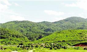 Đồng bào Mạ giữ rừng thiêng