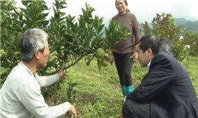 Làm giàu từ chuyển đổi cây trồng