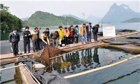 Nuôi cá lăng trên Hồ sinh thái Na Hang