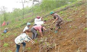 Kỹ thuật trồng sắn trên vùng đất dốc