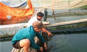 Hiệu quả kinh tế từ nuôi cá lồng