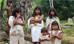 Chuyện về bộ tộc Kogi