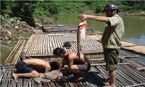 Ứng dụng khoa học công nghệ vào sản xuất ở Quảng Bình: Đang dừng lại ở các mô hình