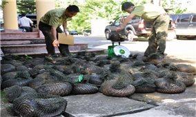 Nhức nhối nạn săn bắn trái phép động vật hoang dã