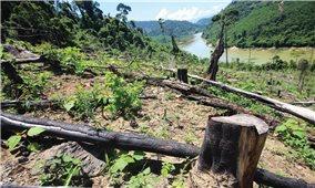 Bảo vệ rừng ở Quảng Nam: Nhiều bất cập