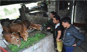Hiệu quả từ áp dụng kỹ thuật thụ tinh nhân tạo trên đàn bò
