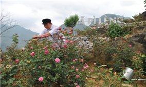Trồng hoa trên núi đá