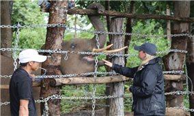 Nhiều thách thức trong bảo tồn voi ở Đăk Lăk