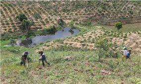 Không giải quyết triệt để tình trạng thiếu đất sản xuất: Tây Nguyên có còn là đại ngàn?