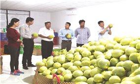 Giải pháp phát triển bền vững vùng cây ăn trái Nam bộ