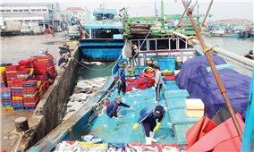 Chậm hỗ trợ kinh phí đóng tàu công suất lớn: Ngư dân mang nợ