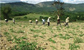 Bình Định: Giải bài toán giao đất rừng cho đồng bào DTTS