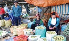 Phát triển hợp tác xã theo mô hình chuỗi liên kết ở khu vực miền núi: Đánh thức tiềm năng nông sản