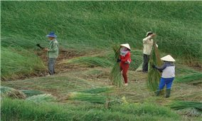 Bình Định: Làng nghề truyền thống đổi mới để phát triển