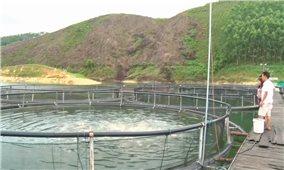Phát triển thủy sản ở Yên Bái: Từ chủ trương tìm đầu ra cho sản phẩm