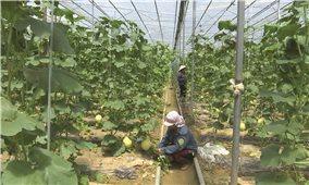Nông dân Huyện Bát Xát (Lào Cai): Tích cực ứng dụng công nghệ cao vào sản xuất