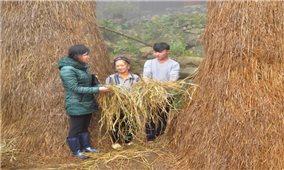 Lào Cai: Không thể chủ quan với phòng chống rét cho gia súc