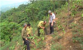 Lào Cai: Ra quân trồng cây đầu xuân Kỷ Hợi