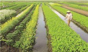 Phong Điền sản xuất nông sản sạch