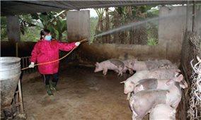 Nghệ An: Người dân cần cảnh giác với dịch tả lợn châu Phi