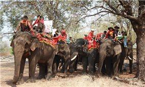 Độc đáo Lễ cúng sức khỏe cho voi