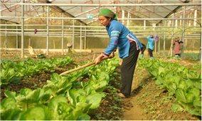 Ứng dụng công nghệ cao vào nông nghiệp: Hướng đi bền vững