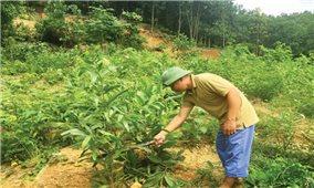 Lợi ích từ trồng rừng theo tiêu chuẩn quốc tế