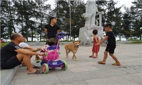 Thanh Hóa: Báo động tình trạng người dân bị chó tấn công