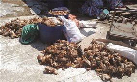 Người dân manh động tấn công trại gà gây ô nhiễm
