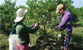 Tây Ninh: Phát triển nông nghiệp công nghệ cao ở Tây Ninh