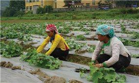 Lào Cai: Ứng dụng công nghệ cao vào sản xuất nông nghiệp
