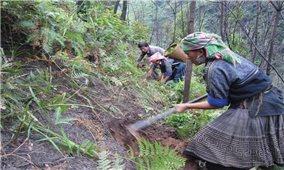 Các tỉnh miền núi phía Bắc: Tăng cường phòng cháy, chữa cháy rừng