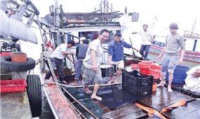 Ngư dân Gio Linh vươn khơi, bám biển