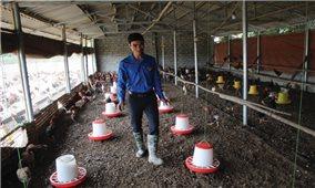 Làm giàu từ nuôi gà VietGAP