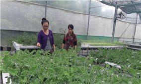 """Hành trình trồng """"rau cao cấp, giá thấp cùng dùng"""""""