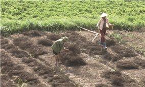 Tràng Định (Lạng Sơn): Phát triển hiệu quả cây đặc sản giúp nông dân làm giàu