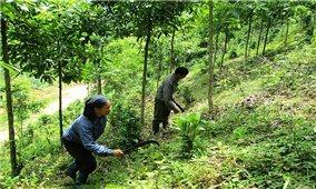 Hỗ trợ gạo cho đồng bào chăm sóc, bảo vệ rừng