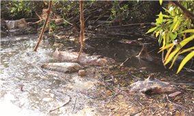 Xử lý nghiêm tình trạng vứt xác lợn chết bừa bãi