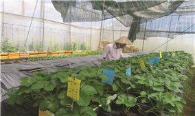 Người Nhật Bản làm nông dân ở Đơn Dương