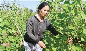 Huyện Ea Súp (Đăk Lăk): Hội Phụ nữ giúp nhau thoát nghèo