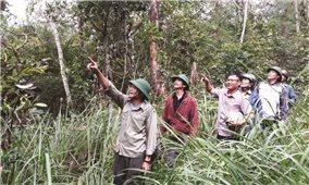 Khi cựu chiến binh giữ rừng
